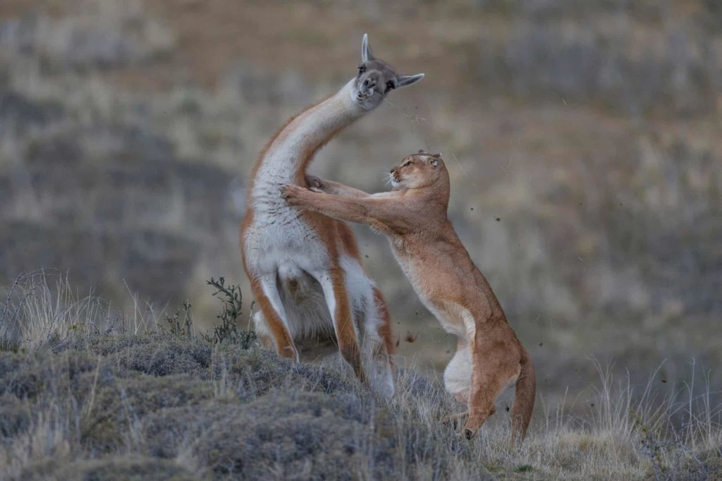 Conjour - Wildlife Photographer of the Year 2019 - Natural History Museum - Wildlife Photography - Animals have stories