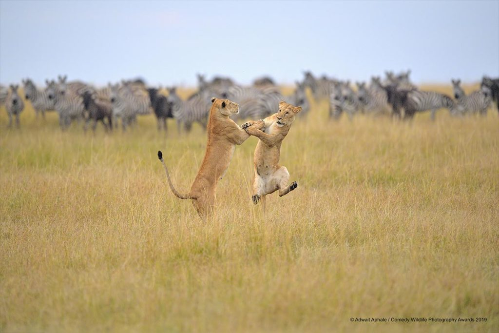 Comedy Wildlife Photography Awards 2019 Finalists - Conjour World Wildlife Photography
