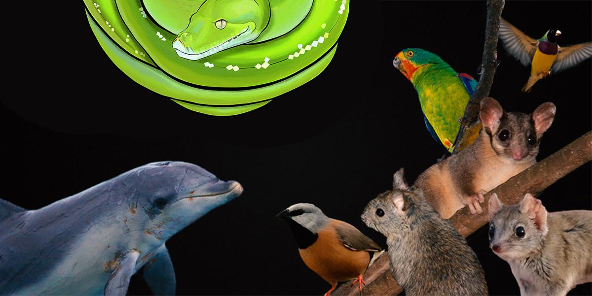 Wildlife vote, Australian animals, ANiMOZ - Fight for Survival