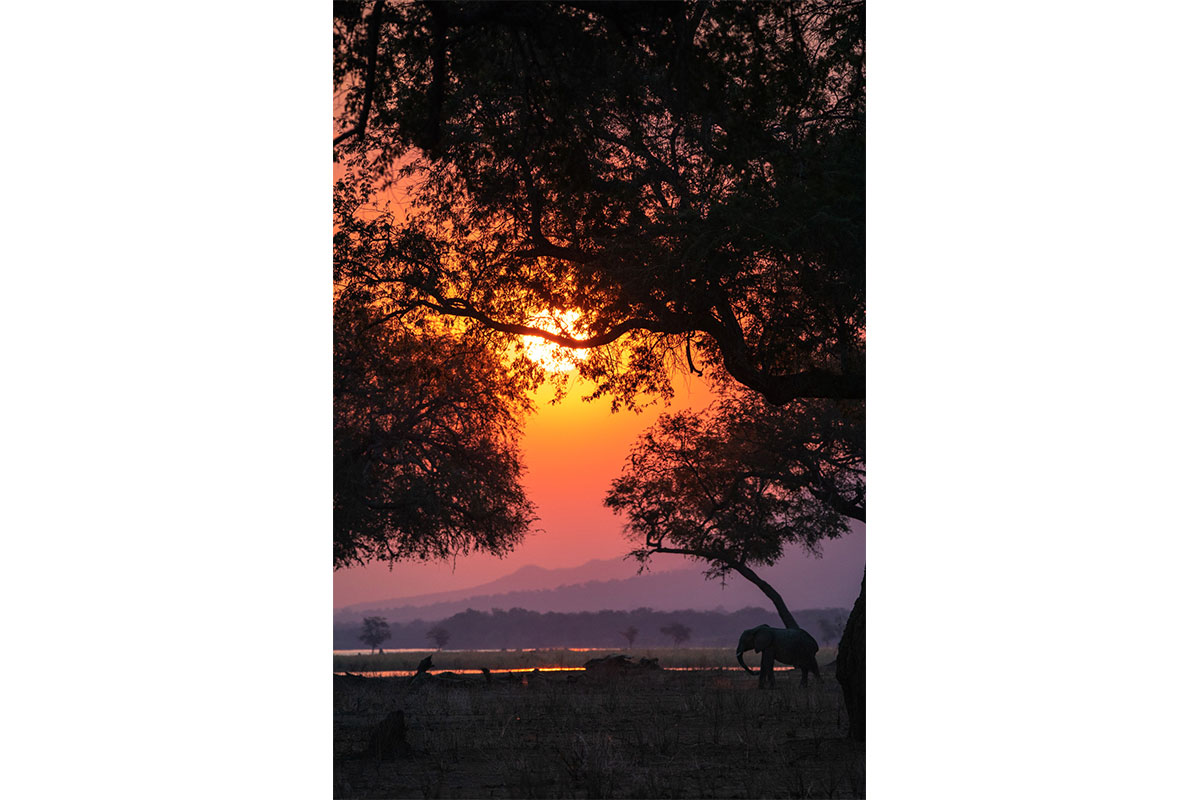 Alice Peretie - Elephant - African Sunset - Nature Conservation - Conjour 2