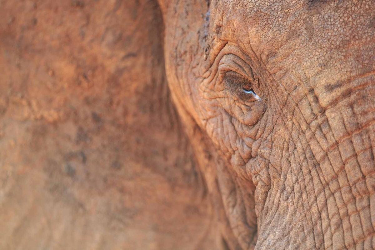 Elephant - Andreas Hemb - Conjour Wildlife Photography
