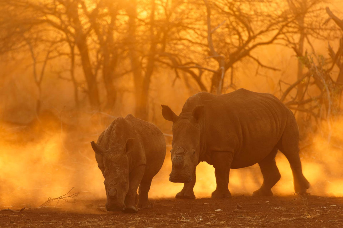 Rhinoceros - Andreas Hemb - Conjour Wildlife Photography