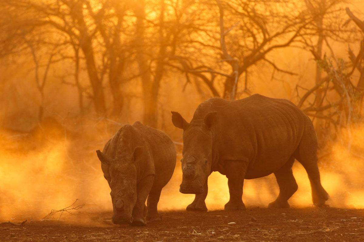 Rhinoceros - Andreas Hemb - Conjour Wildlife Photography