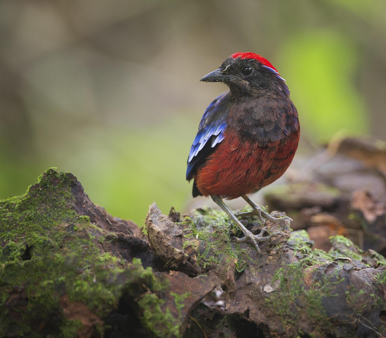 Birdlife International - Courtesy of Fanny Lai and Bjorn Olesen