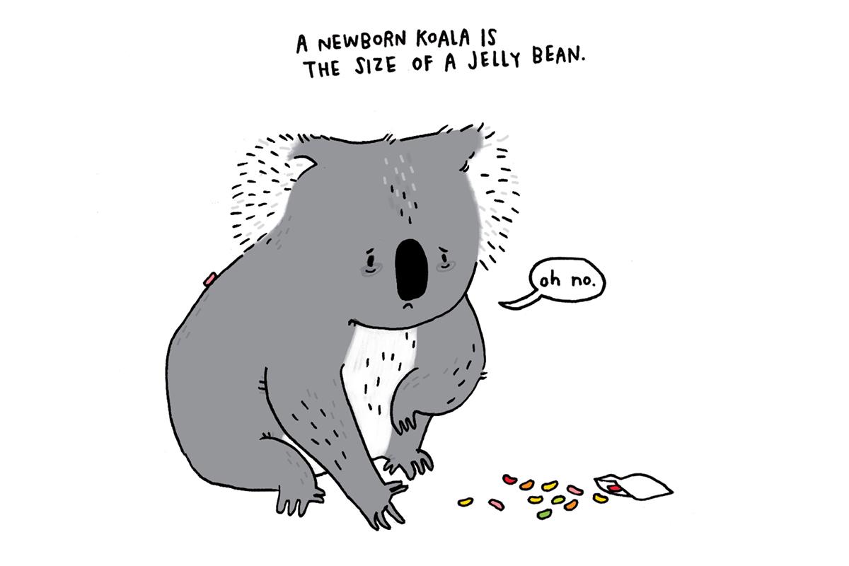 Brooke Barker - SadAnimalFacts - Baby Koala