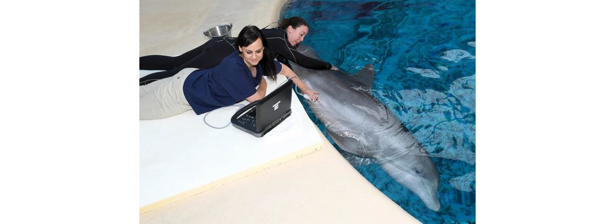 Dolphins - Brookfield Zoo Report - Conjour Zoology
