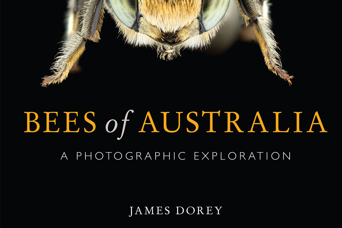 Conjour - Bees of Australia - Book Review - Bee Species - James Dorey - CSIRO - Macrophotography