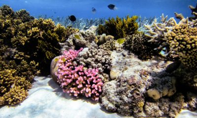 Conjour - Great Barrier Reef - Editorial