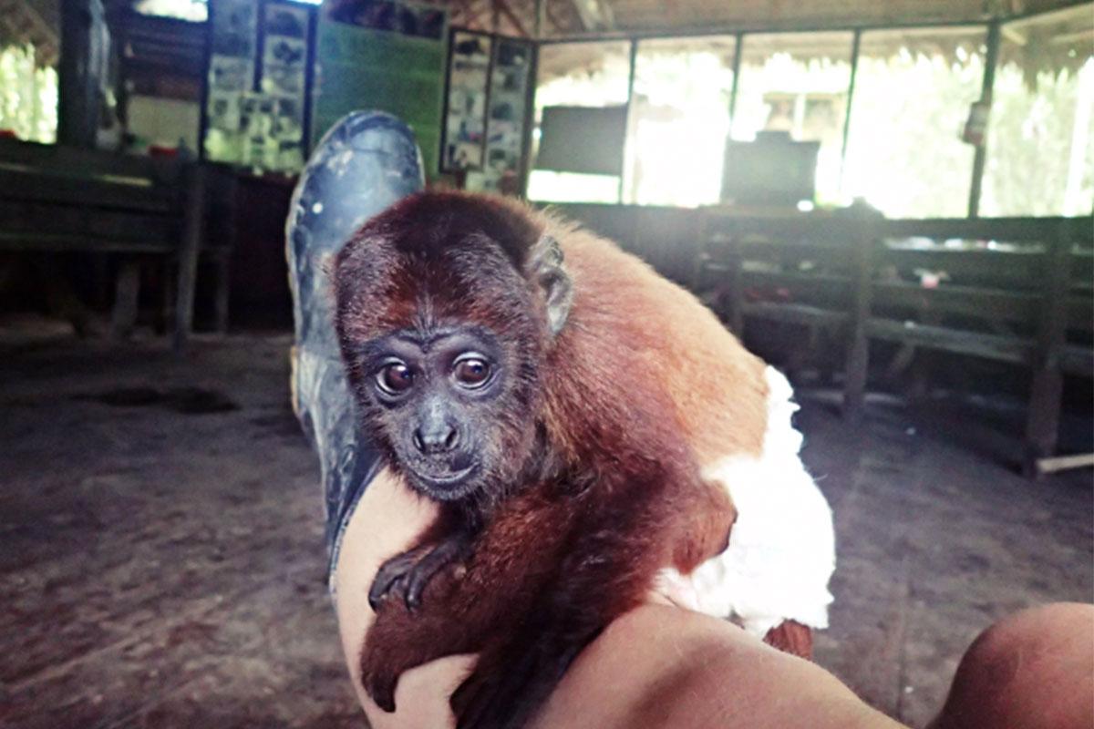 Conjour - Hoja Nueva - Monkey