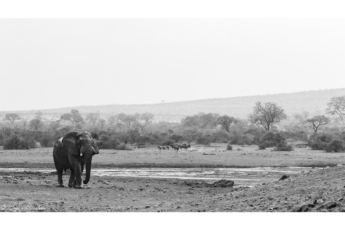 Conjour - Wildlife Photography - Megan Carstens - Conservation Photography - Elephant Landscape