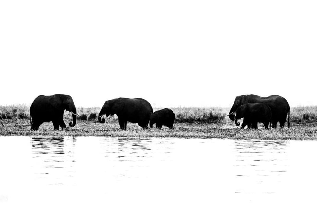 Conjour Wildlife Photography - Motswiri Photography - Elephant