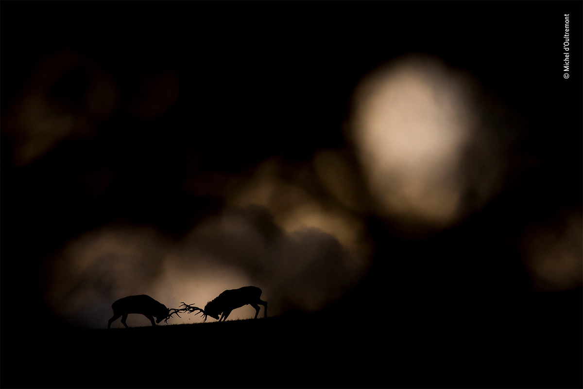 Conjour.world - Wildlife Photographer of the Year 2018 - Winners