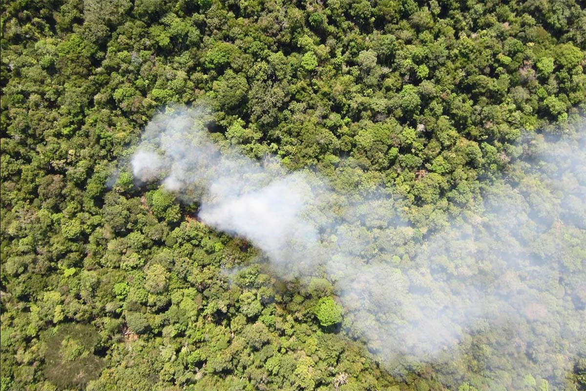 Deforestation - IPAM Amazonia - Conjour