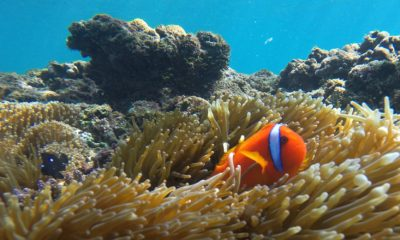 Great Barrier Reef aiming to be saved - Conjour Editorial - Australia Great Barrier Reef - Coral - Reef Fish - Feature Image - 1