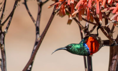 Life is a journey not a destination - Conjour Wildlife Photography Feature - Charlotte Cornwallis - Feature Image - Hummingbird - 0