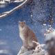 Living Planet Report 2016 - Conjour Editorial - Eurasian lynx - Bavaria - Germany - Planet Earth II