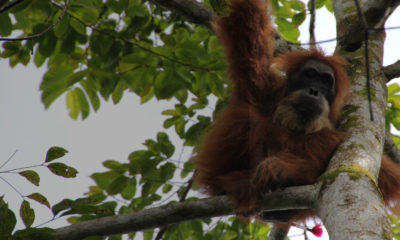 On Patrol With The Rangers of Tangkahan - Conjour Editorial - Conservation Journal World - Feature