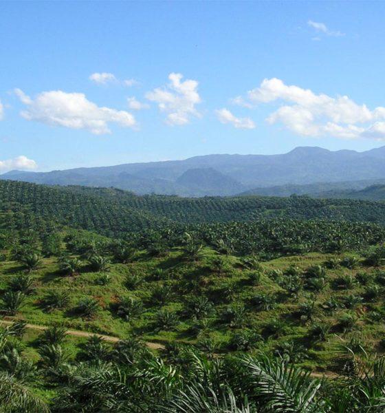 PepsiCo Mars Palm Oil Deforestation Conjour