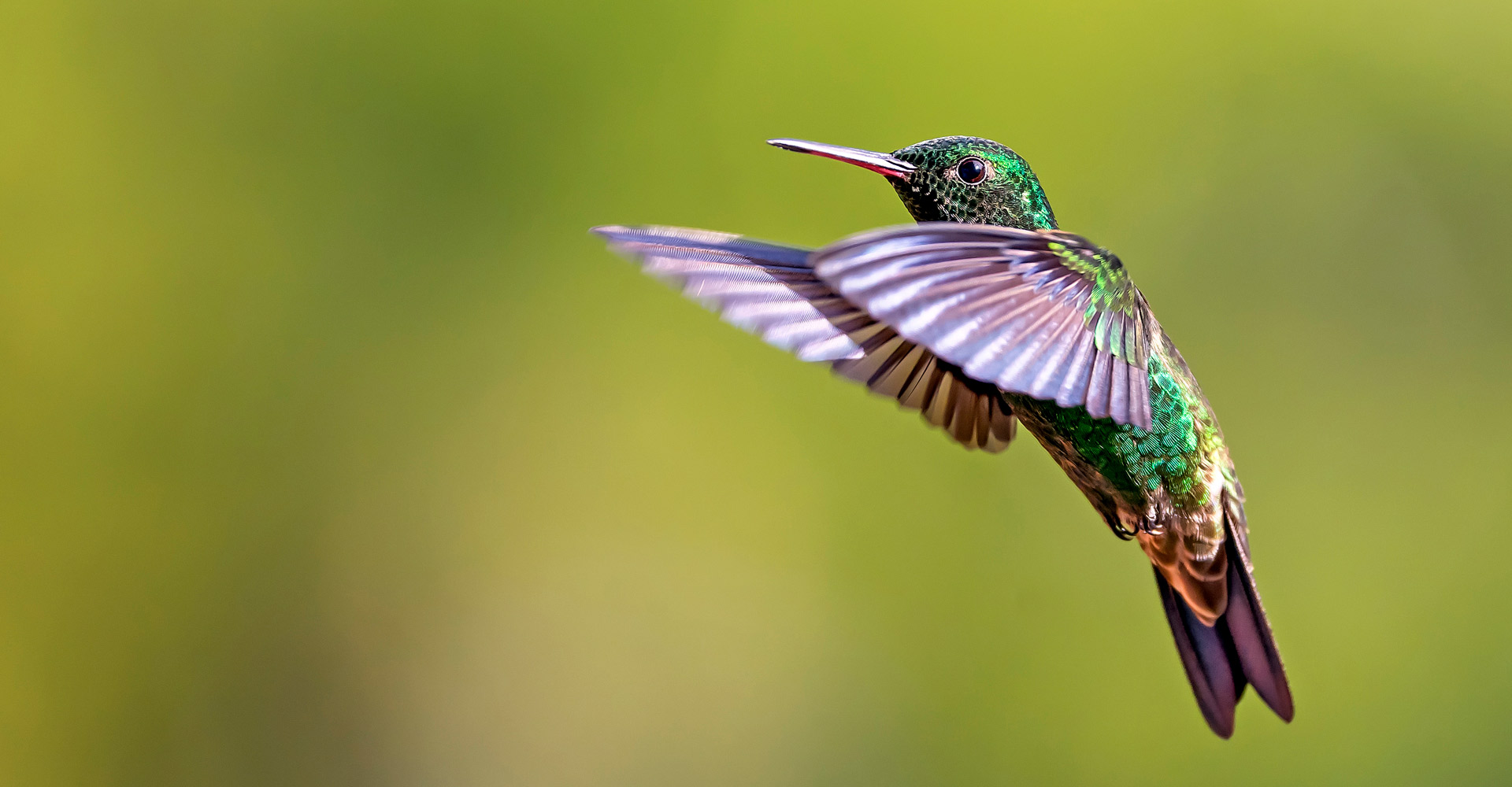 Photography to Conserve - Conjour Wildlife Photography Feature - Hummingbird - Feature