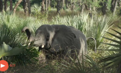 Elephants of Mozambique - The Guardian Video - Conjour