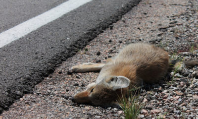 The Impact of Roads on Wildlife - Habitat Fragmentation - Conjour Editorial