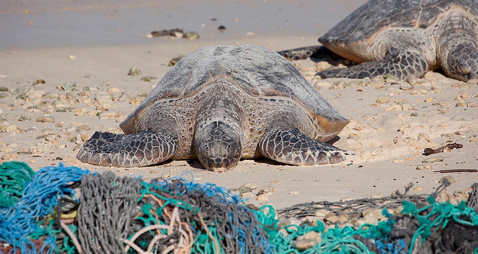 Ocean Litter - Fishing nets - Ally Kristan - Conjou