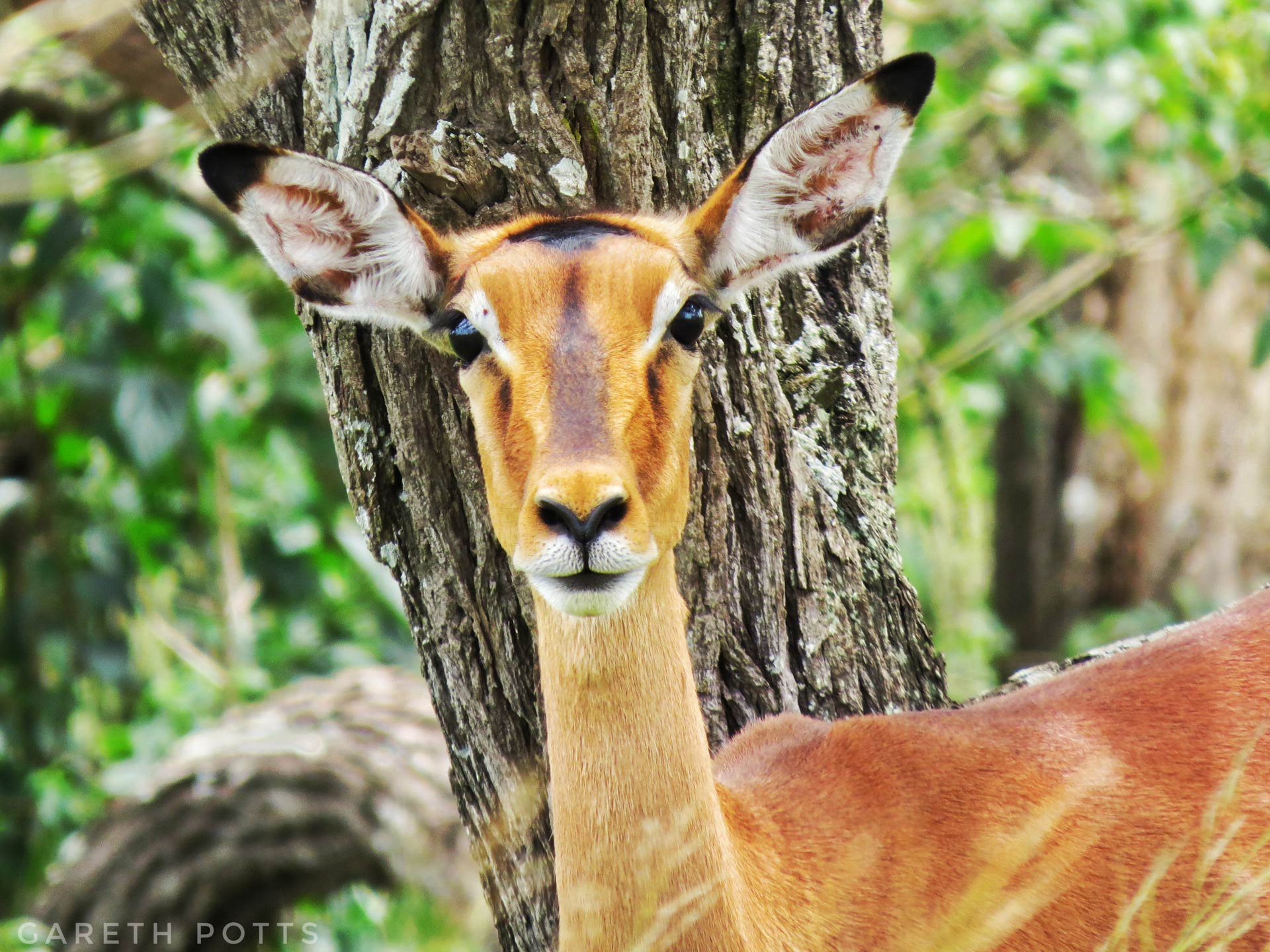 Those Fences We Built - Gareth Potts - Conjour Wildlife Photography Feature - 0 - Impala