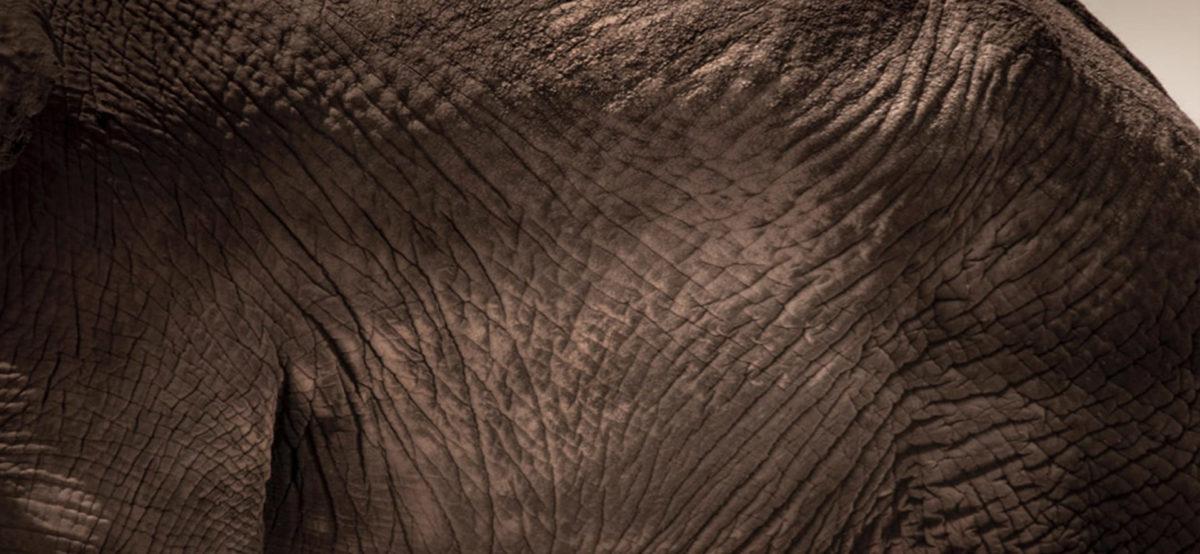 Bee-Elle Photography - Elephant - Conjour Wildlife Photography