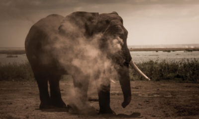 Bee-Elle Photography - Elephant - Conjour Wildlife Photography