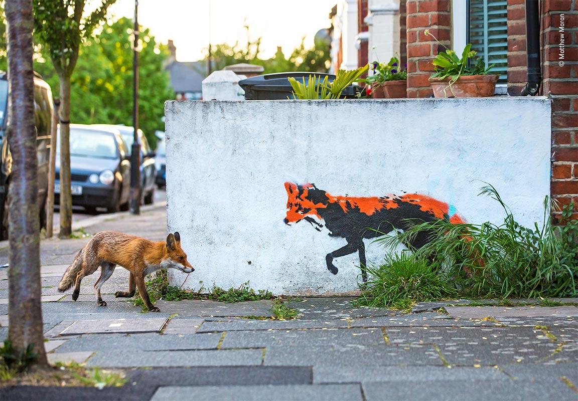 WPY19 - Conjour - Foxes - Matthew Maran