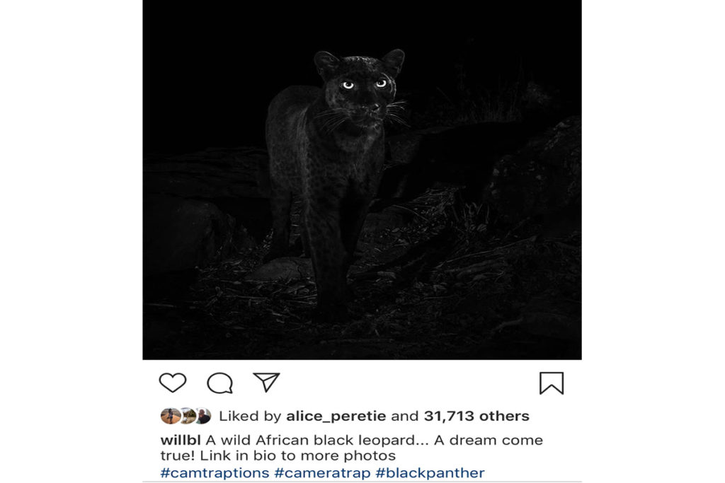 Melanistic Leopard - Will Burrard-Lucas - Conjour Wildlife Photography