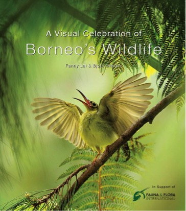 Win A Visual Celebration of Borneo's Wildlife - Conjour